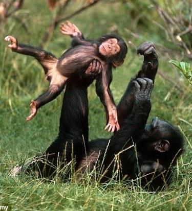 monkey flip wrestling