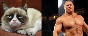 Grumpy Cat raw