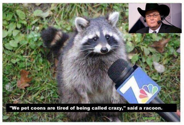 crazy pet coon