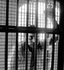 Punjabi prison WWE