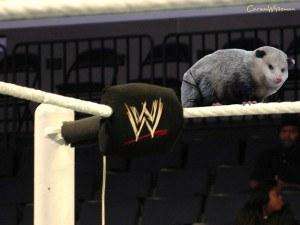 wrestler playing possum