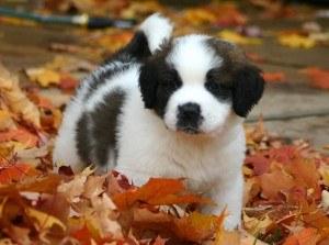 puppy8