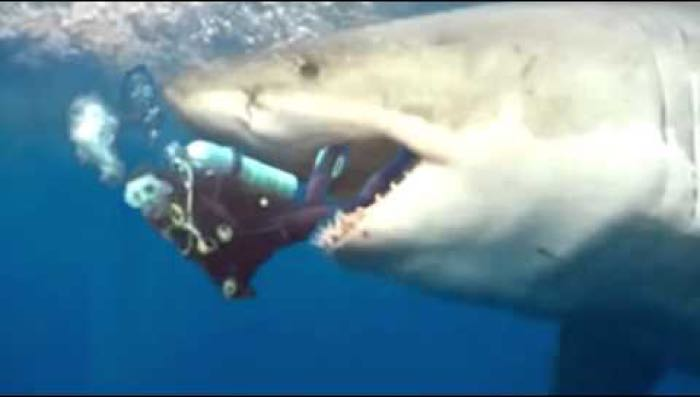 Marine biologist eaten after loaning shark cage to WWE ...